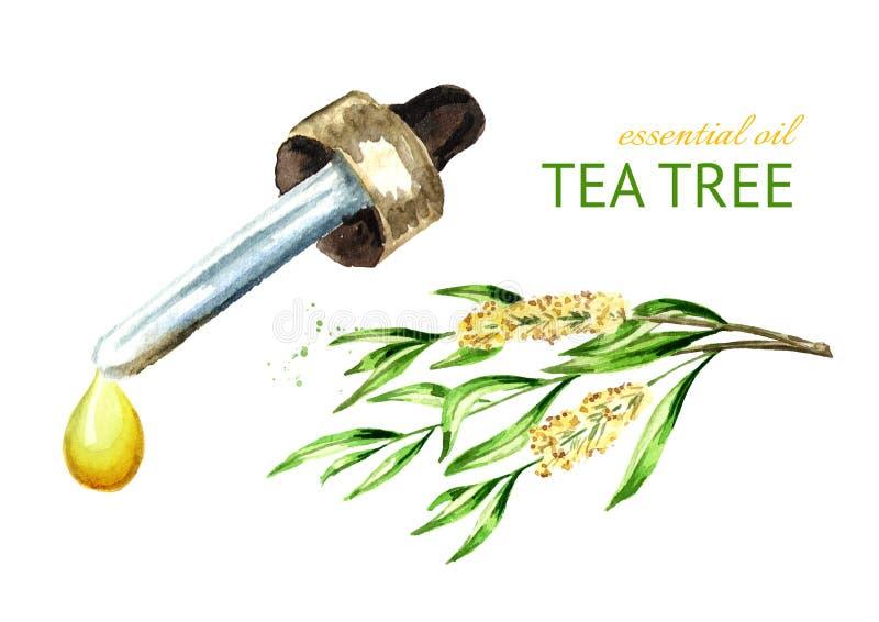 Descenso del aceite esencial del árbol del té Planta medicinal y de los cosméticos Ejemplo dibujado mano de la acuarela, aislado  libre illustration