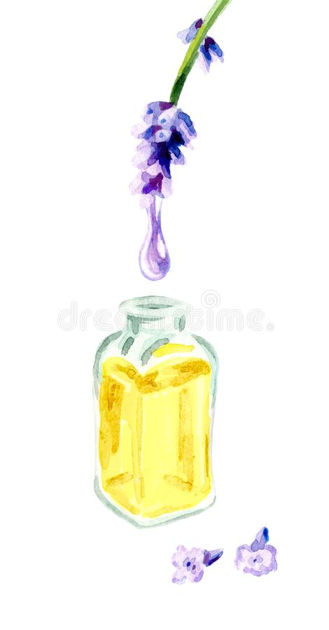 Descenso del aceite esencial de la lavanda Ejemplo dibujado mano de la acuarela, aislado en el fondo blanco libre illustration