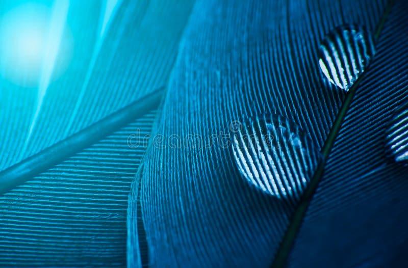 Descenso del agua en la capa en color azul, foto macra de la pluma imagen de archivo
