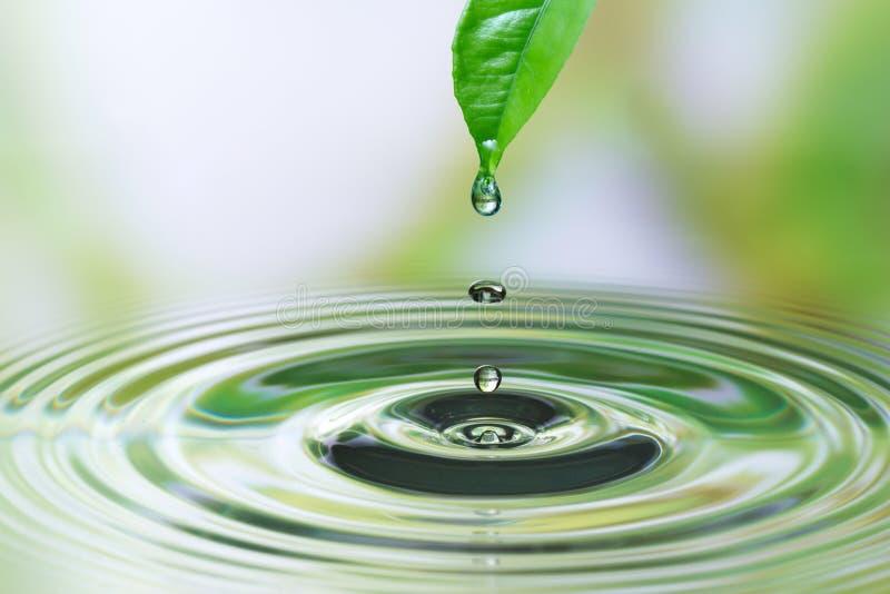 Descenso del agua en la hoja imagen de archivo libre de regalías