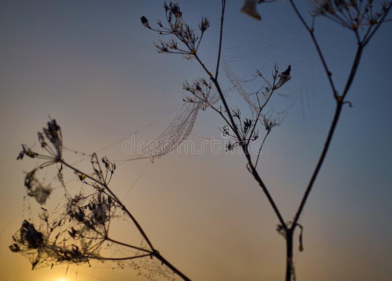 Descenso del rocío durante la salida del sol coloreada tranquila imagen de archivo libre de regalías