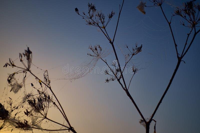 Descenso del rocío durante la salida del sol coloreada tranquila foto de archivo