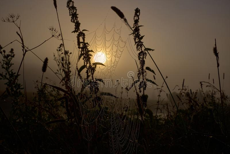 Descenso del rocío en una línea de la araña durante salida del sol tranquila foto de archivo
