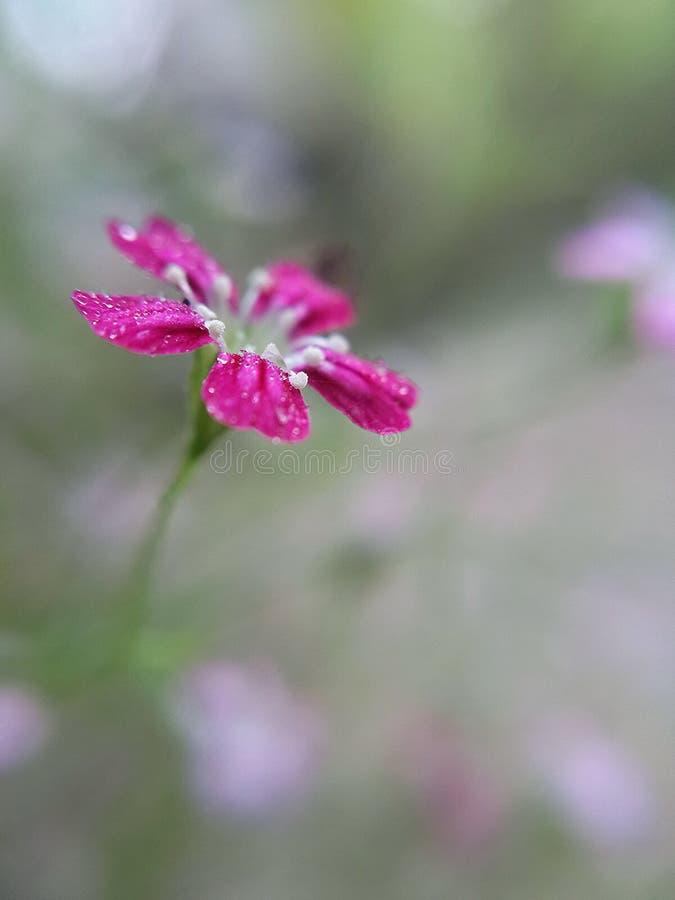Descenso en la flor imagen de archivo