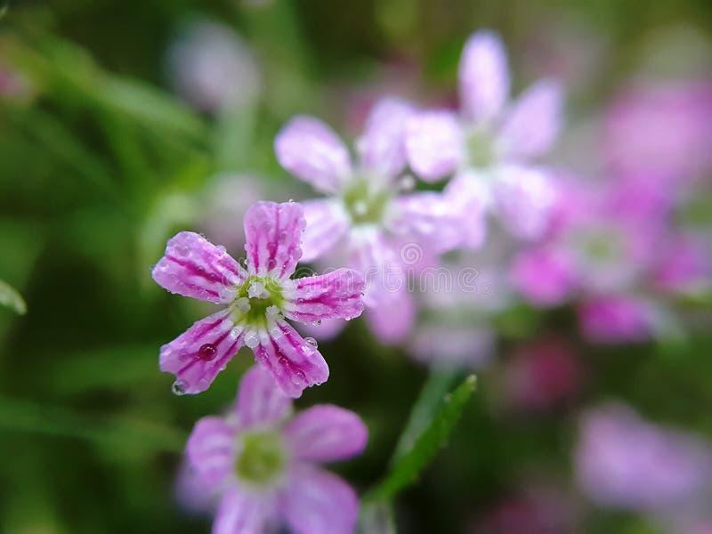 Descenso en la flor imagenes de archivo