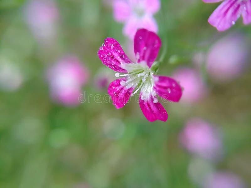 Descenso en la flor imagen de archivo libre de regalías