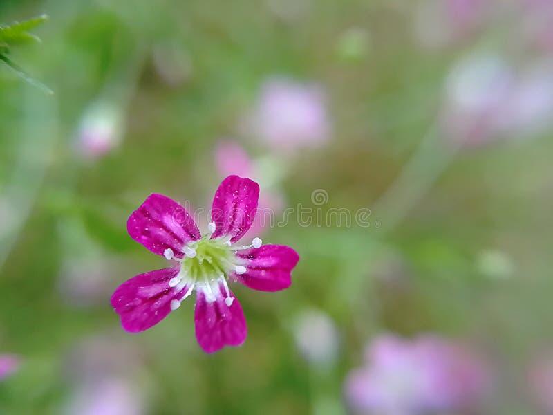 Descenso en la flor foto de archivo