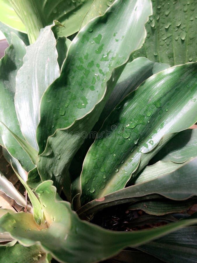 Descenso en la hoja verde fotografía de archivo