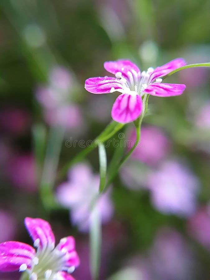 Descenso en las flores imagenes de archivo