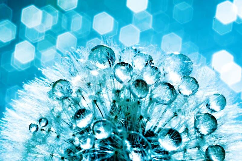 Descensos de rocío hermosos en una semilla del diente de león Macro Fondo azul claro y violeta suave hermoso Foco selectivo fotografía de archivo