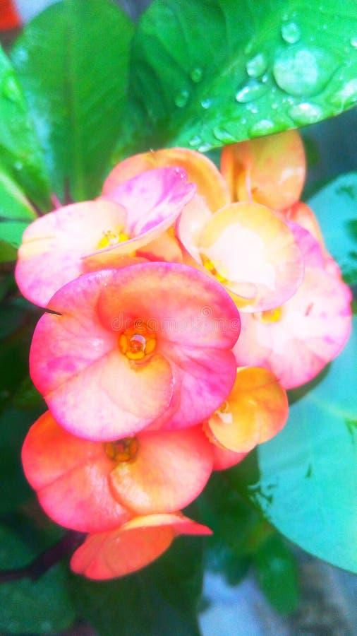 Descensos del cactus de una flor y de la lluvia fotografía de archivo libre de regalías