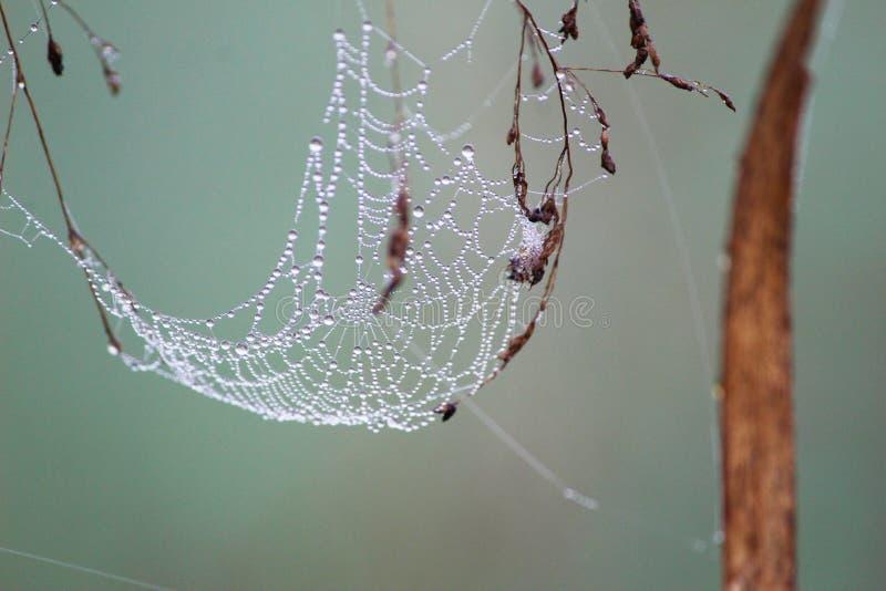 Descensos en el web del ` s de la araña imagen de archivo