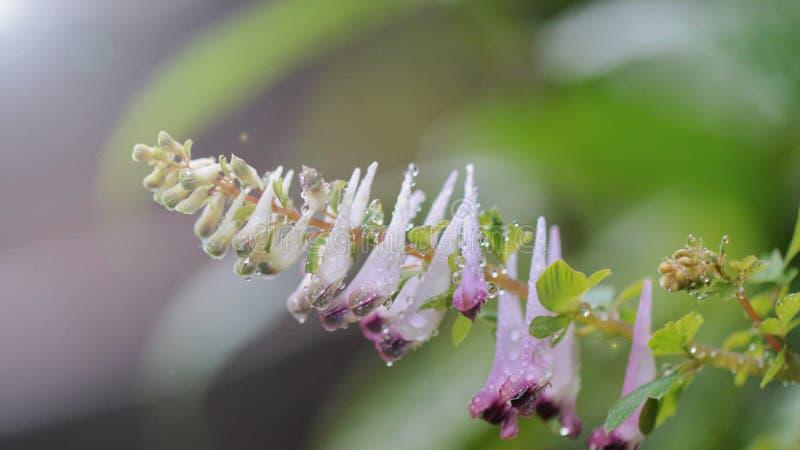 descensos en primavera fotos de archivo