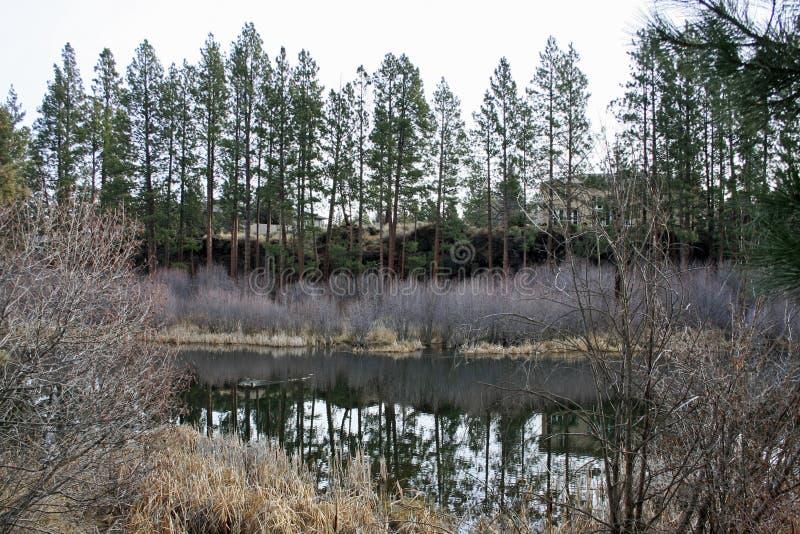 Download Deschutes River Near First Street Rapids Stock Photo - Image: 34868560