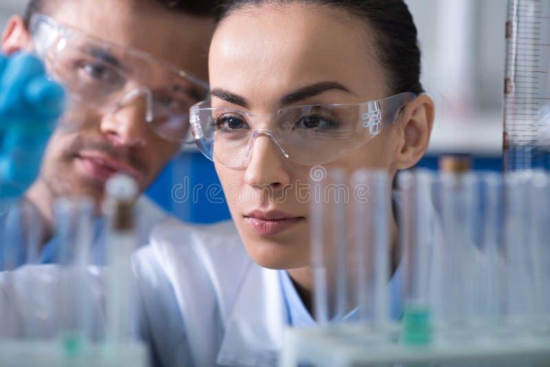 Descobridores espertos da perspectiva que conduzem a pesquisa e que concentram-se nela imagem de stock