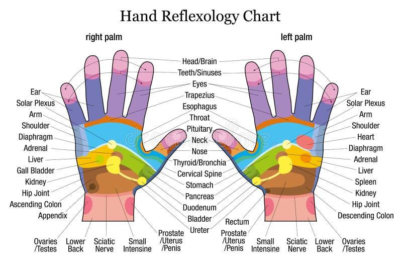 Descripción de la carta del reflexology de la mano ilustración del vector