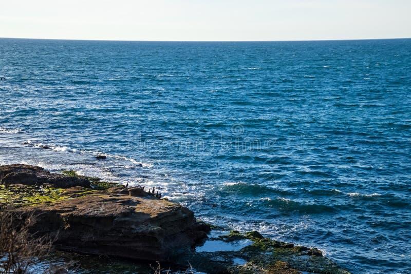 Descripción del Océano Pacífico en la playa de La Jolla, en donde la escuadrilla de pelícanos se encarama en un peñasco foto de archivo libre de regalías