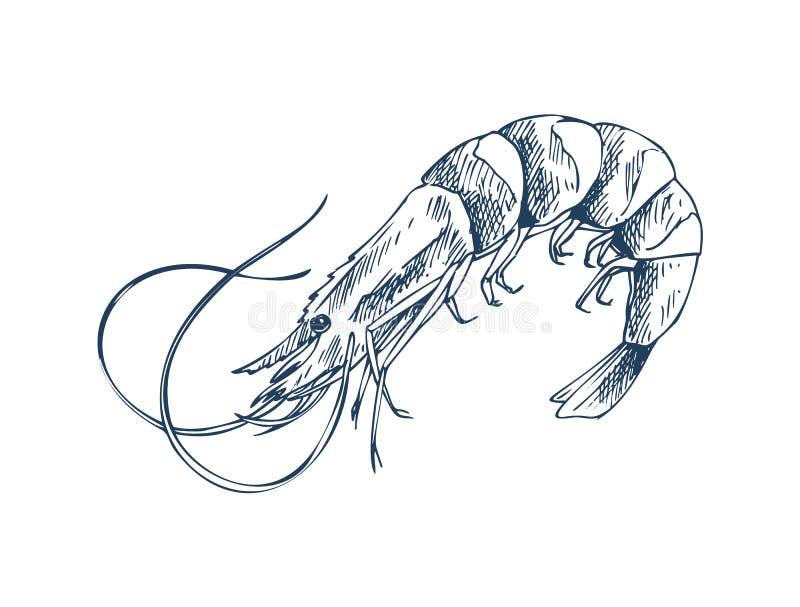 Description monochrome de petite crevette de créature aquatique illustration stock