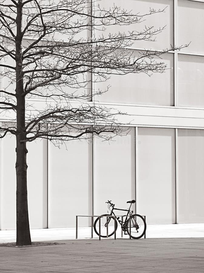 Descubra el árbol y una bici fotos de archivo
