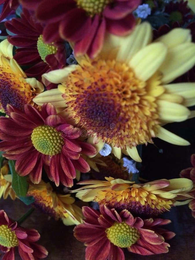 Desde Las Flores photos stock