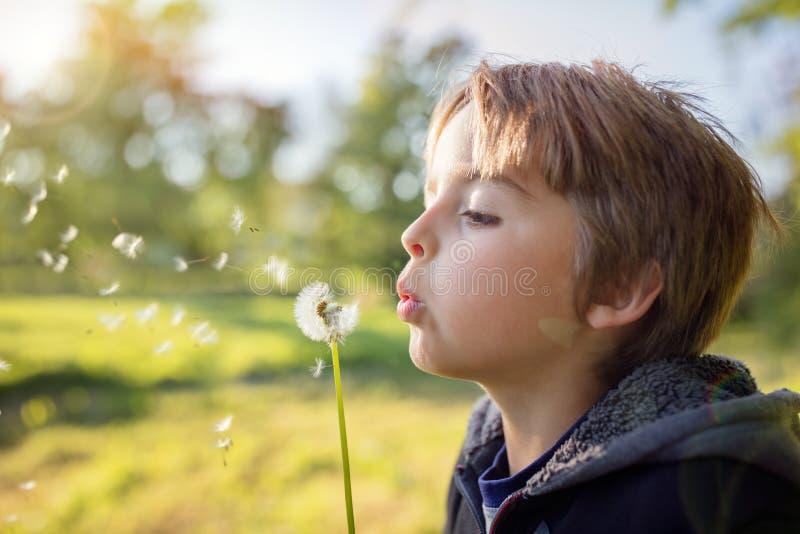 Desejos do dente-de-leão de uma criança fotos de stock royalty free