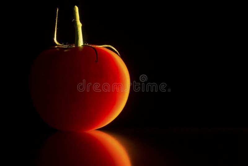 Desempenho de solo de um tomate fotografia de stock