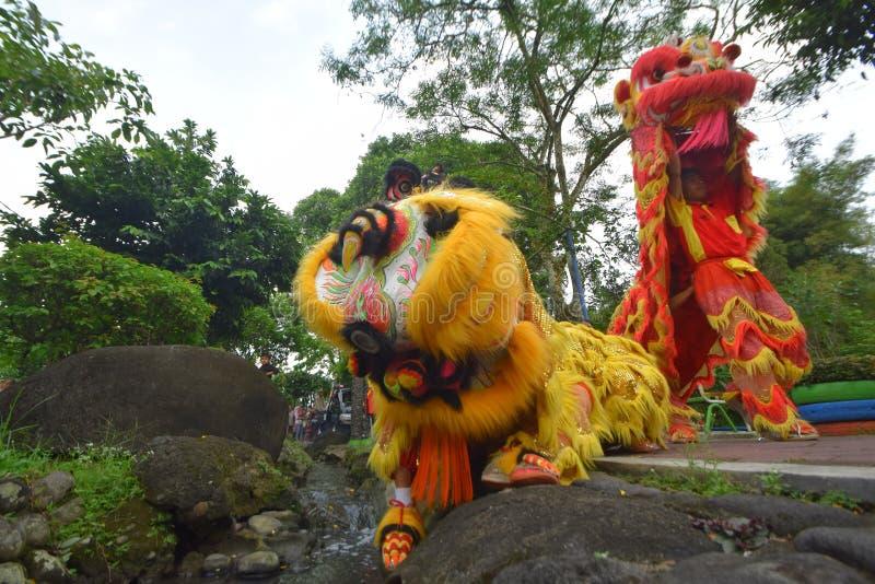 Desempenhos de dançarinos do leão imagens de stock