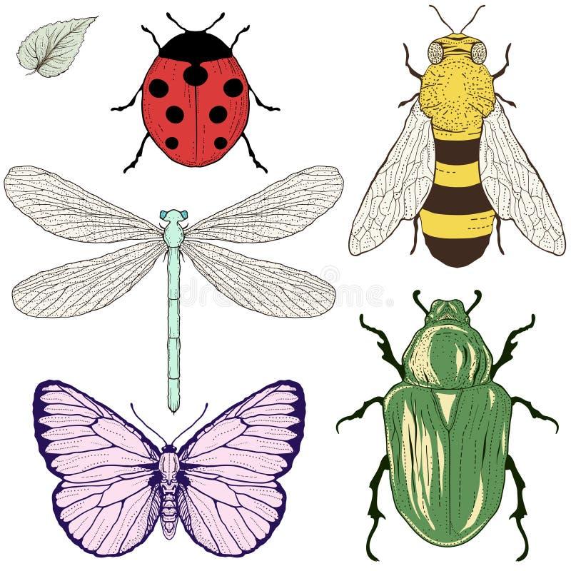 Desenho ajustado insetos ilustração do vetor