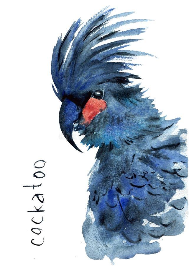 Desenho aquarela de um papagaio australiano - cockatoo preto ilustração stock
