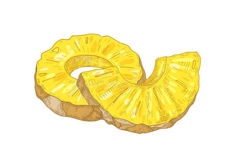 Desenho botânico realístico de fatias do anel e partes de abacaxi orgânico fresco isolado no fundo branco delicioso ilustração do vetor