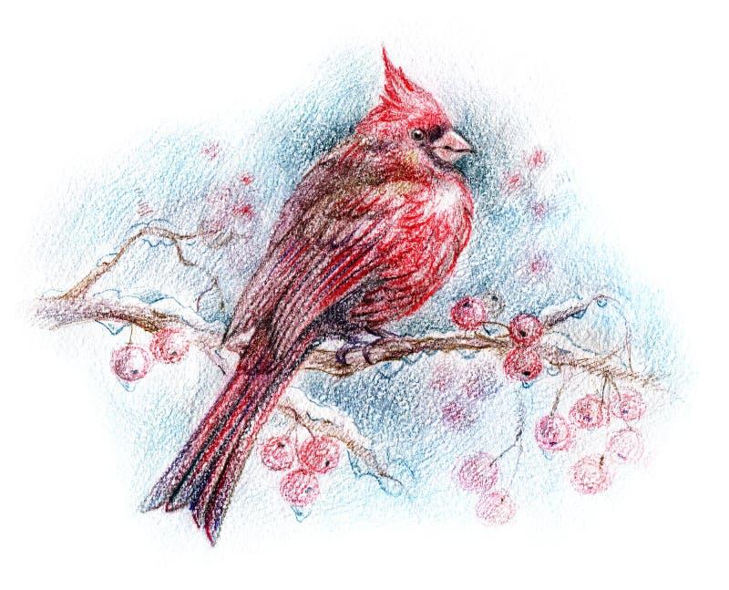Desenho cardinal do norte do pássaro ilustração stock