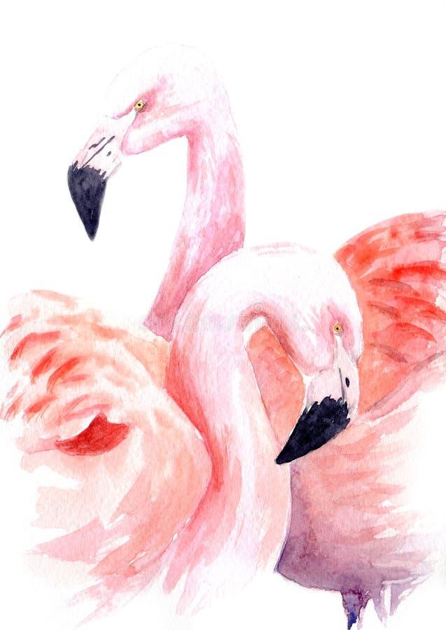 Desenho da aquarela de um par loving de flamingos cor-de-rosa ilustração do vetor