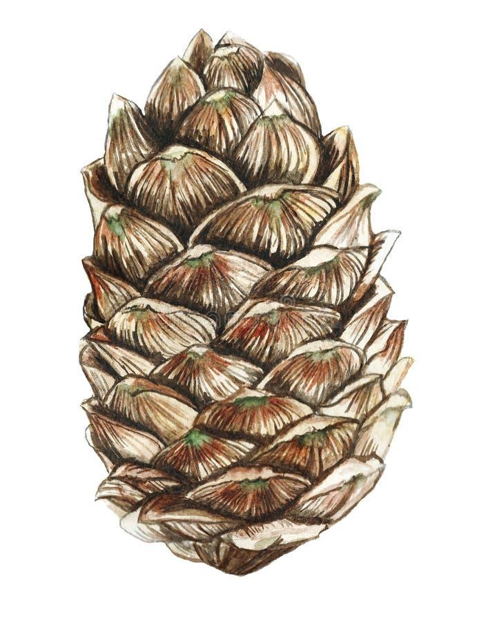 Desenho da aquarela de uma árvore de Natal em desenho detalhado, decoração por um feriado do ano novo e Natal em um fundo branco ilustração royalty free