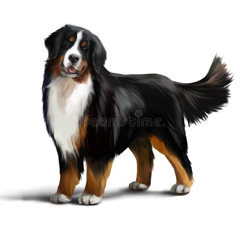 Desenho da aquarela do cão de montanha de Bernese ilustração do vetor