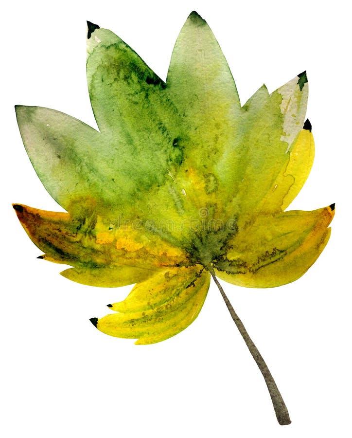 Desenho da aquarela da folha do outono ilustração stock