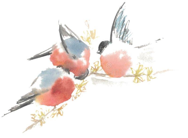 Desenho da aquarela, ilustração Três dom-fafe em um ramo Segunda edição ilustração royalty free