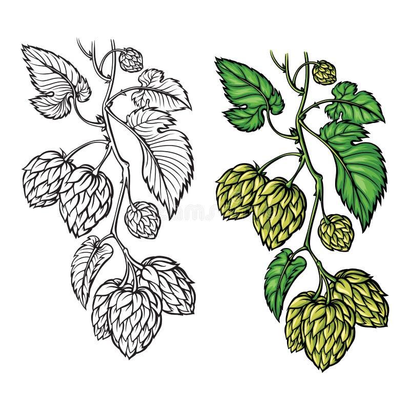 Desenho da mão de um ramo dos lúpulos ilustração do vetor