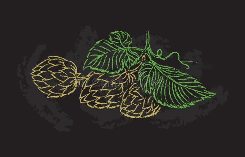 Desenho da mão de um ramo dos lúpulos ilustração royalty free