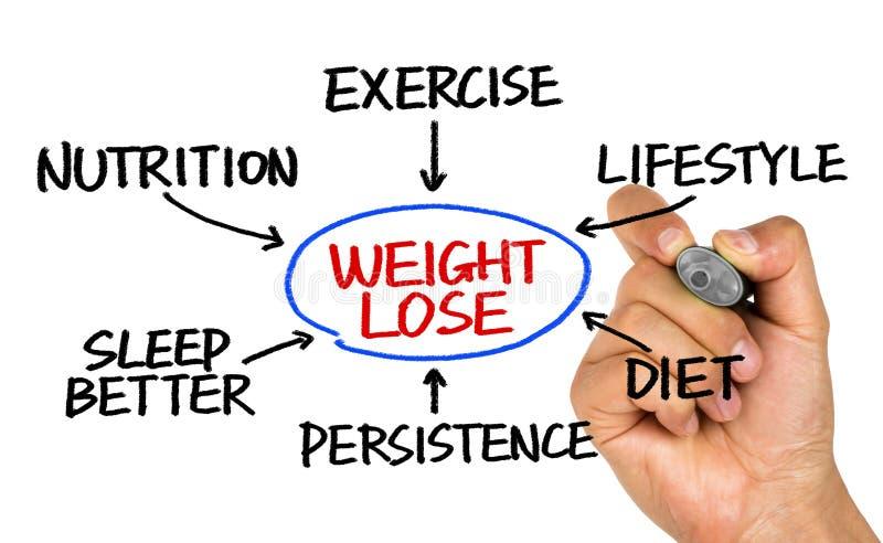 Desenho da mão do fluxograma da perda de peso no whiteboard imagem de stock