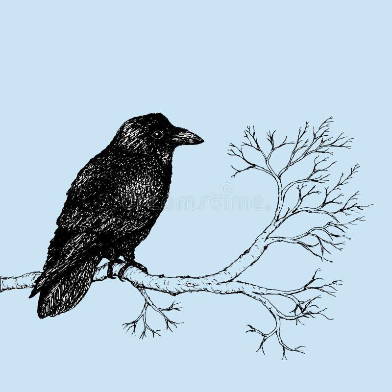 Desenho da pena do corvo ilustração royalty free