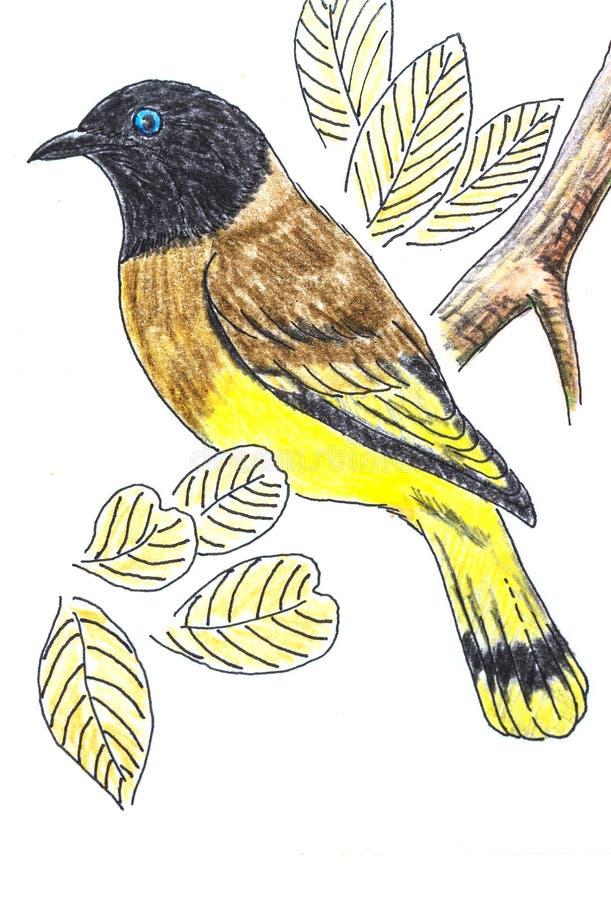 Desenho de cabeça negra do pássaro do Bulbul ilustração do vetor