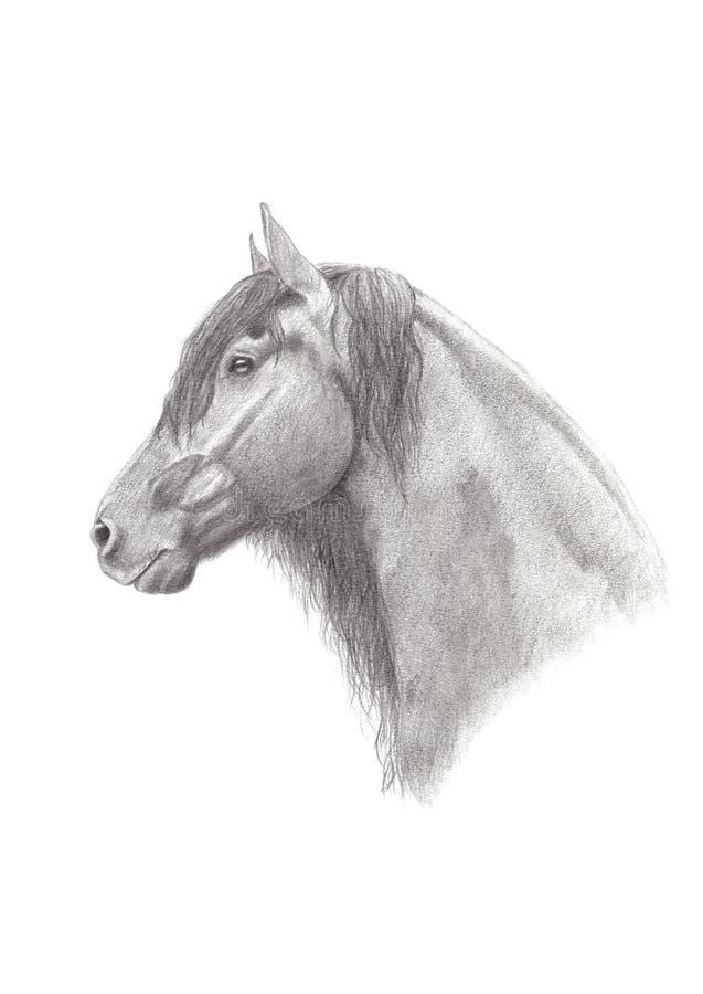 Desenho de lápis da grafita de um cavalo do frisão ilustração royalty free
