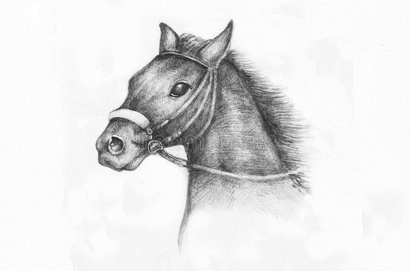 Desenho de lápis de um cavalo ilustração stock