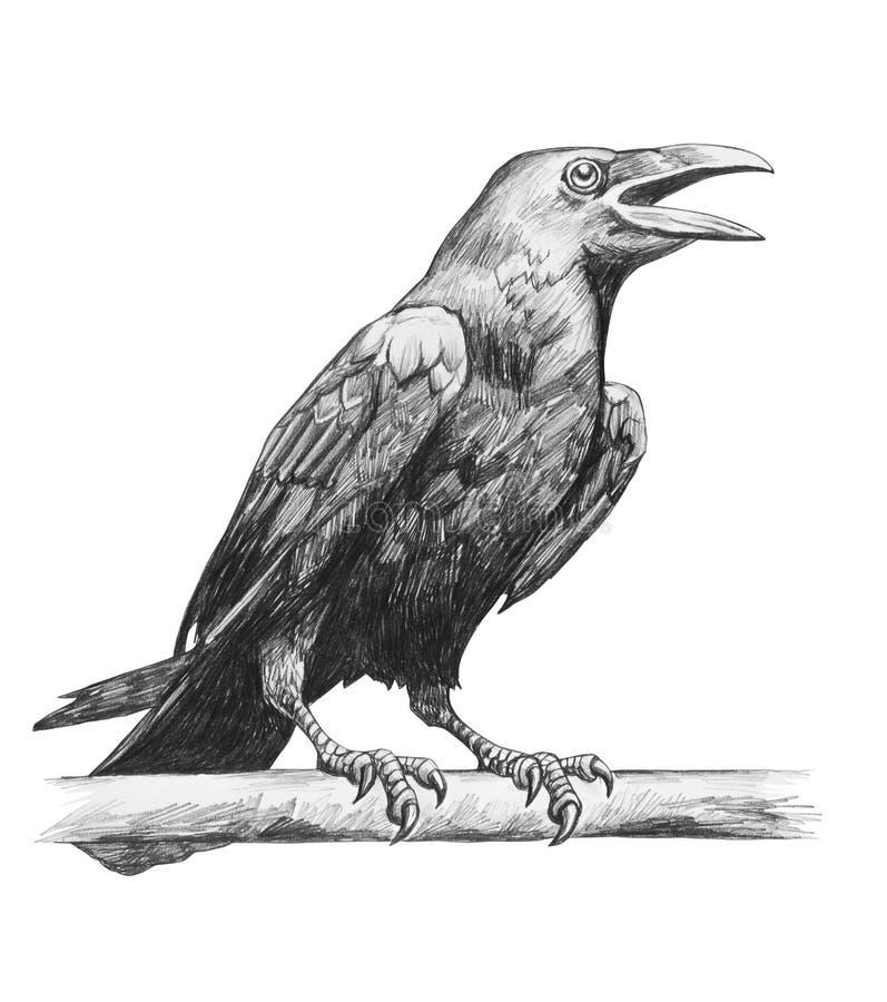 Desenho de lápis do corvo ilustração stock
