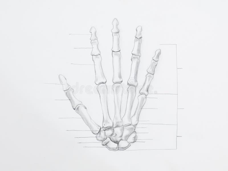 Desenho de lápis dos ossos de mão fotografia de stock