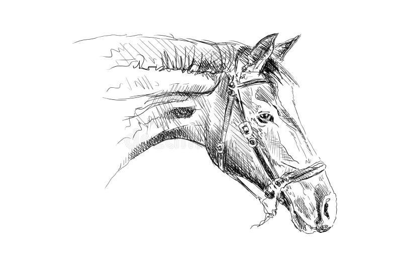 Desenho de lápis a mão livre da cabeça de cavalo ilustração royalty free