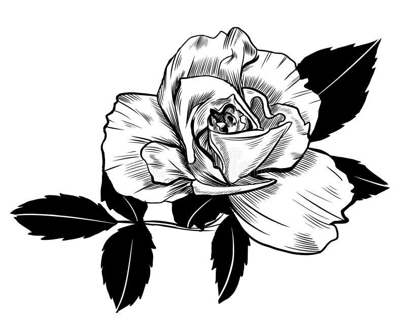 Desenho de Rosa ilustração stock