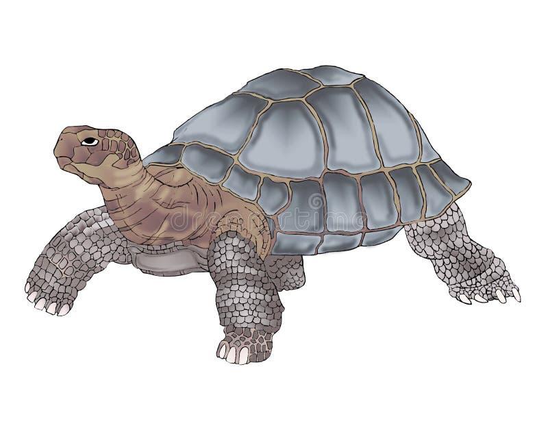 Desenho detalhado da tartaruga de Galápagos na cor ilustração do vetor