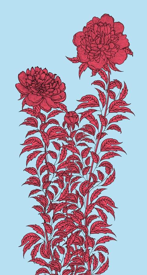 Desenho detalhado de gráfico de vetor que descreve um arbusto da peônia ilustração royalty free