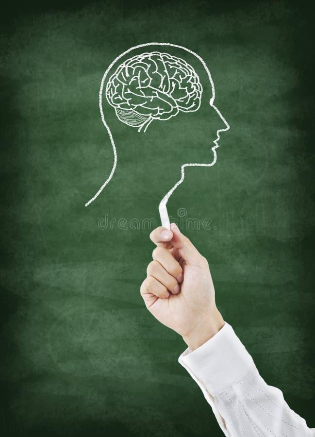 Desenho do cérebro no quadro foto de stock royalty free